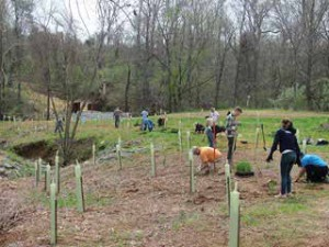 volunteers planting trees in a park